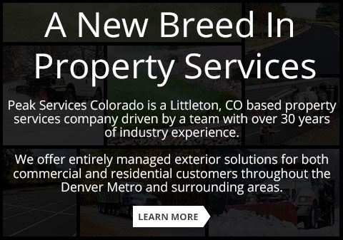 A New Breed In Property Services